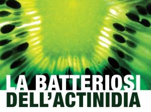 batteriosi-actinidia
