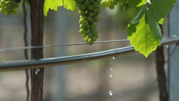 Tecniche per migliorare l efficienza dell acqua di for Tecniche di irrigazione